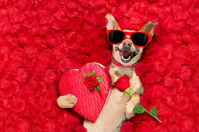 Valentijnskaartenhond met roze bloemblaadjes stock foto's