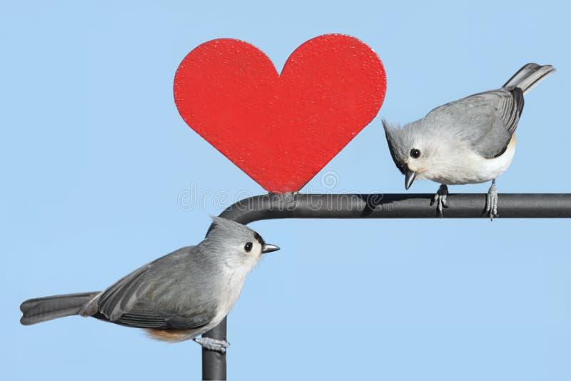 valentin för fågelhjärtapar royaltyfri foto