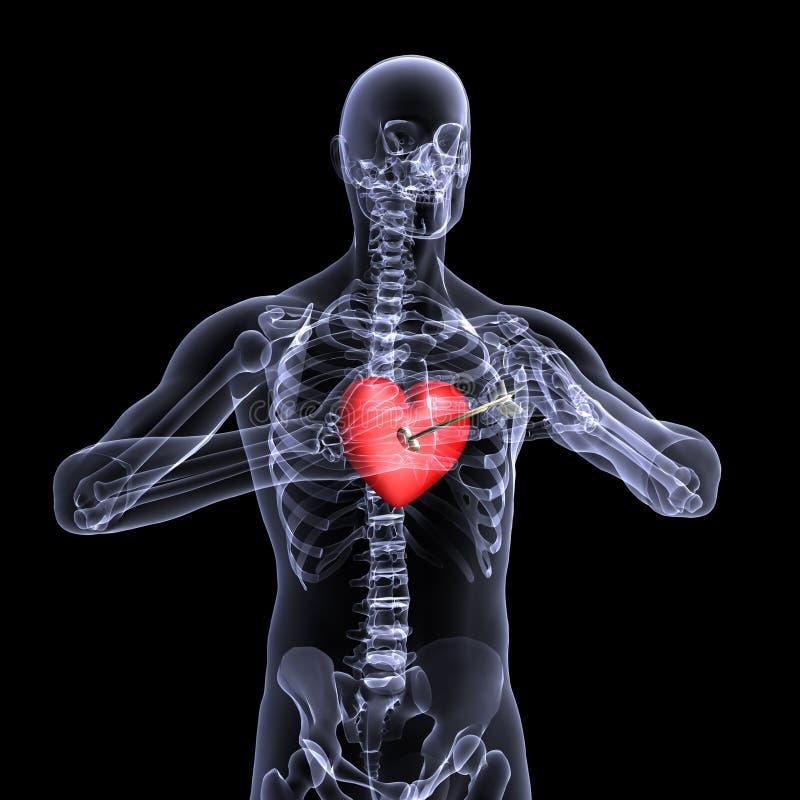 valentin x för stråle för 3 hjärta skelett- vektor illustrationer