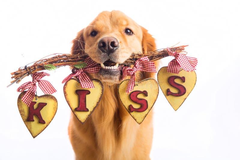 Valentin hållande tecken för daghund som säger KYSSEN royaltyfri foto