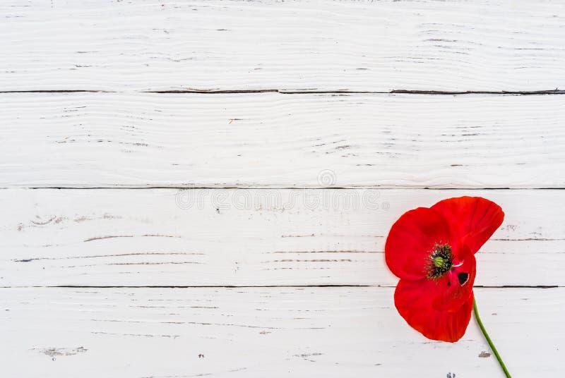Valentin` s eller bakgrund för moder`-dag med en härlig röd vallmoblomma på vitt trä royaltyfria bilder