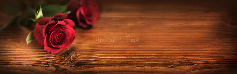 Valentindag med symboliska röda rosor arkivbild