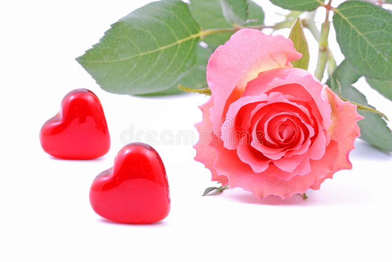 Valentine 2. Two red Valentine Heart and pink rose stock photos