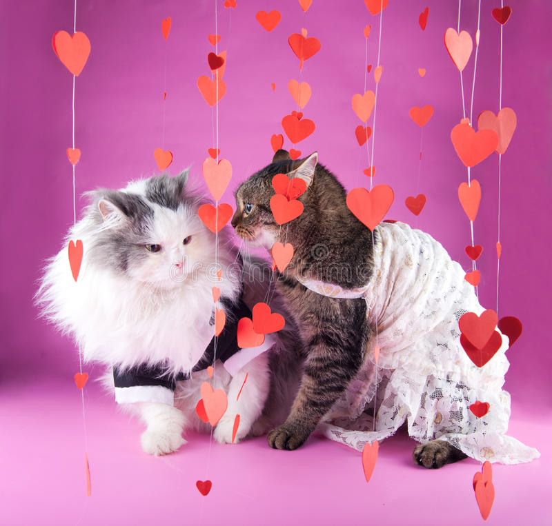 Download Valentine stock photo. Image of green, cute, pink, animal - 22846444