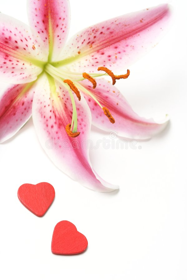 Valentine. Heart with lily on white background stock photos