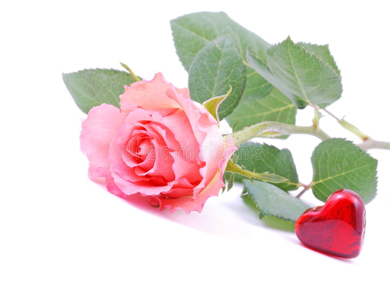Valentine. Heart and pink rose on white background stock photos