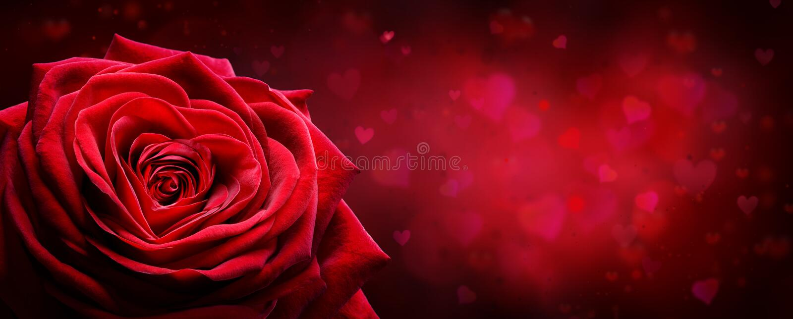 Valentine Card - Red Rose Shape Heart stock photos