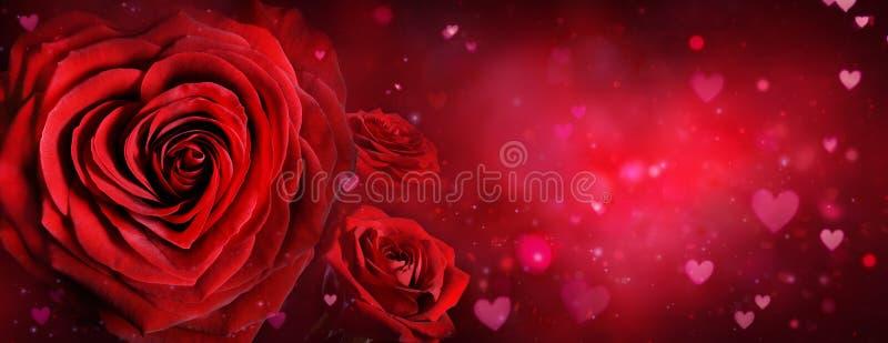 Valentine Card - rosas y corazones foto de archivo libre de regalías