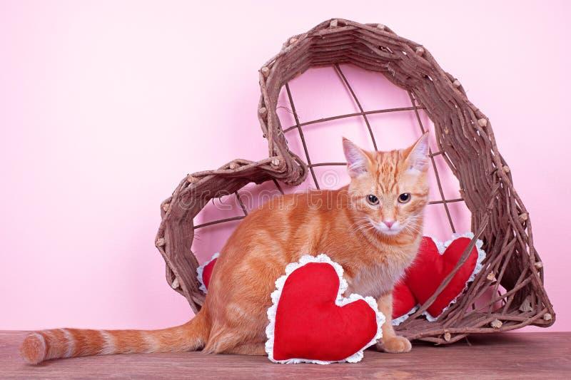 Valentine Cat photographie stock libre de droits