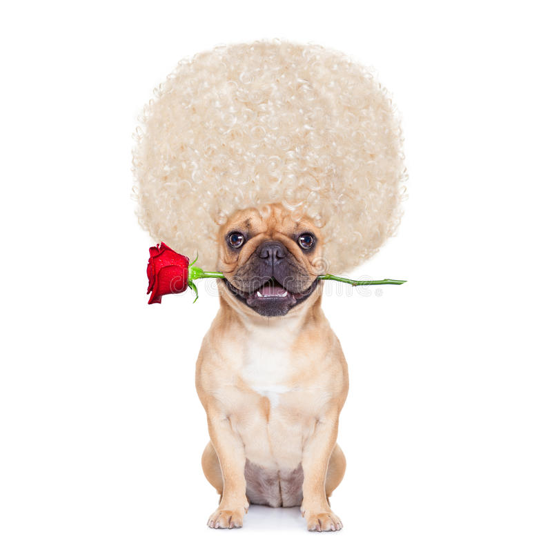 Valentine Dog photos stock