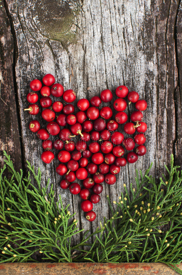 Valentine red heart natural. A red heart made of red holly berries on a old wood texture surface framed by green branches. Valentine day or a natural love royalty free stock photo