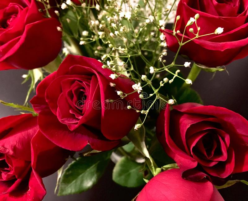 Valentine& x27; rosas do dia de s fotos de stock royalty free