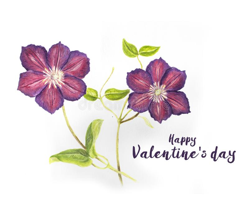 Valentine`s day card with Hand drawn purple Clematis stock illustration