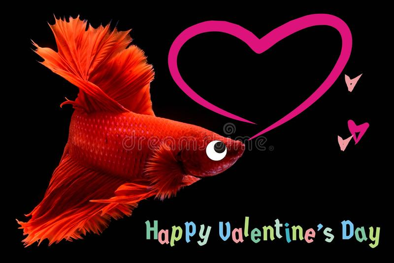 Valentine`s Day card with a heart on a betta fish background royalty free stock images