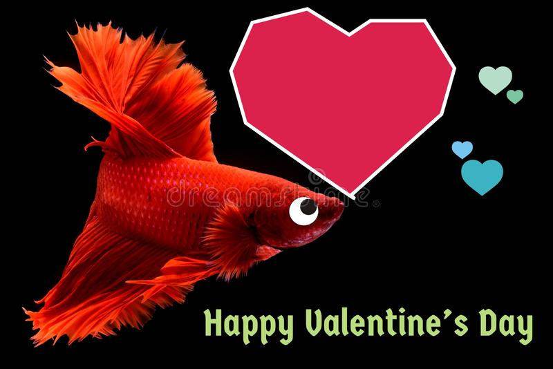 Valentine`s Day card with a heart on a betta fish background stock images