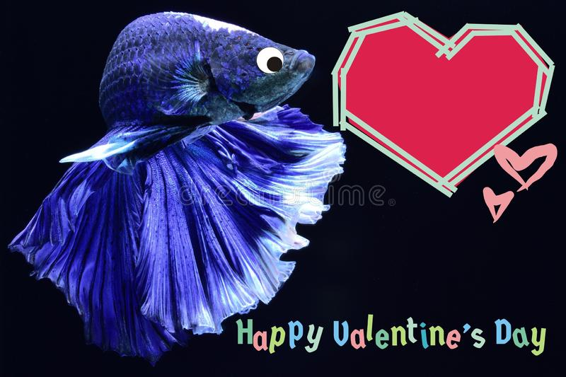 Valentine`s Day card with a heart on a betta fish background stock image