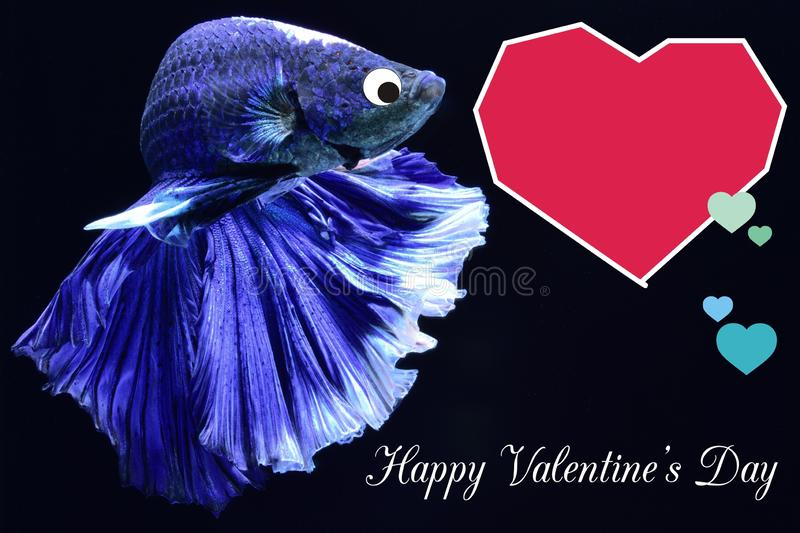 Valentine`s Day card with a heart on a betta fish background royalty free stock photo