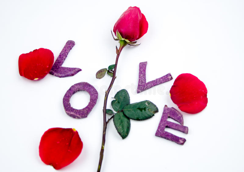 Valentines day concept background. With I love you letters and rose stock photos