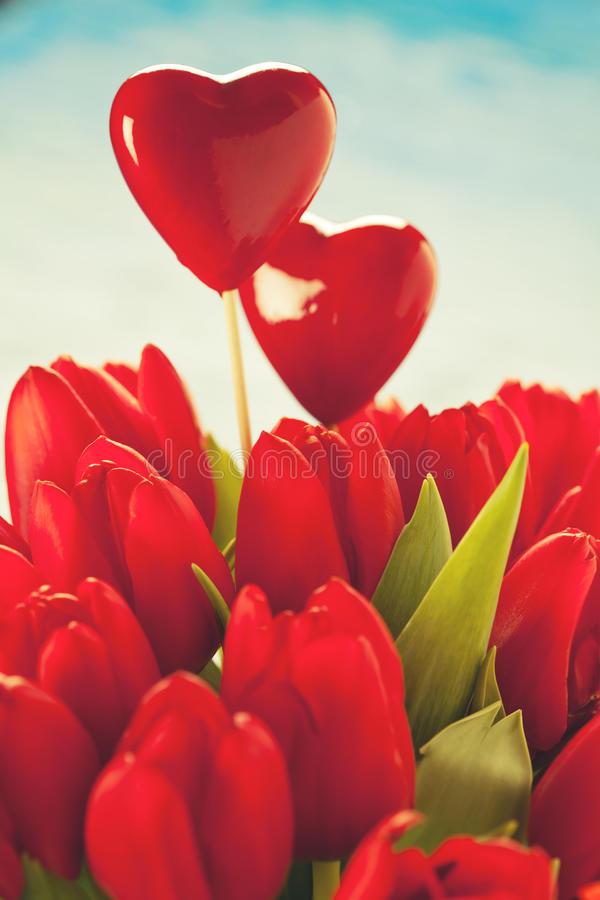 Valentine's. Valentine day concept: bunch of red tulips royalty free stock image