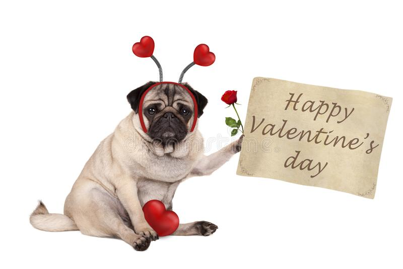 Valentine`s day pug dog sitting down, holding up paper scroll, wearing diadem with hearts royalty free stock photos