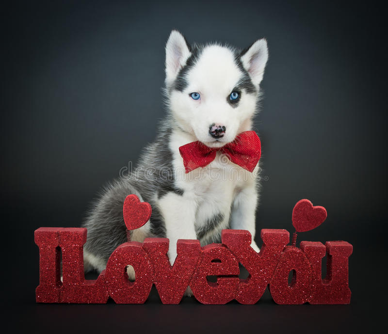 I Love You Husky Puppy Husky Puppy I Love You...