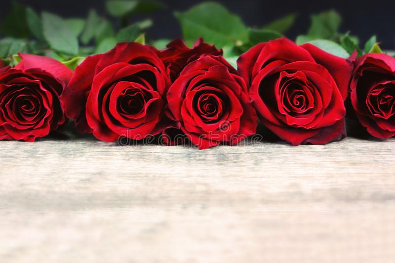 Valentine`s Day Roses in a Line on Rustic Wooden Background royalty free stock photos