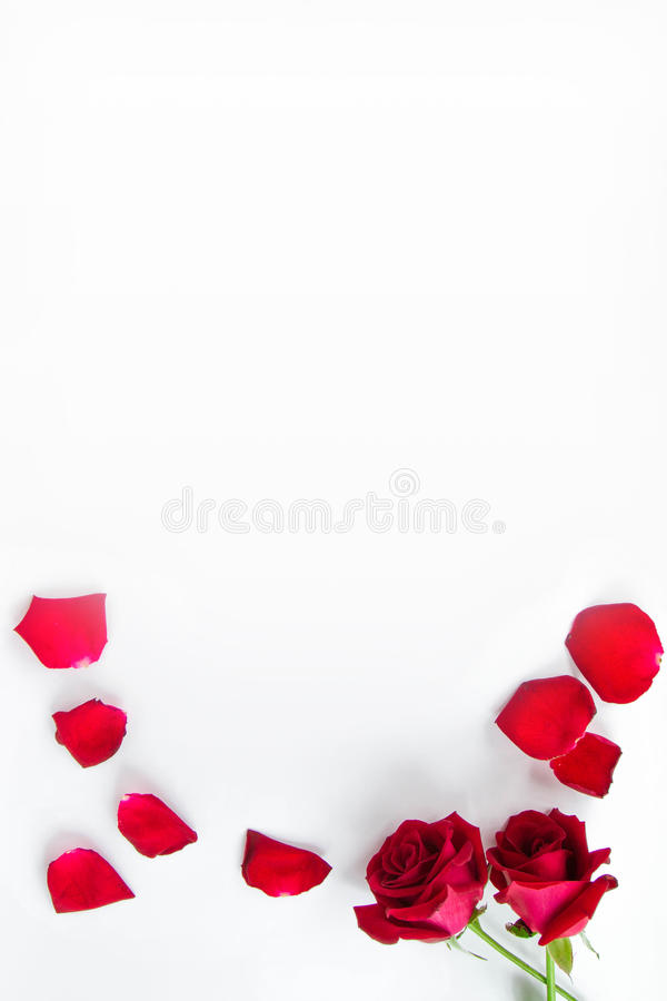 Valentine`s Day stock photos