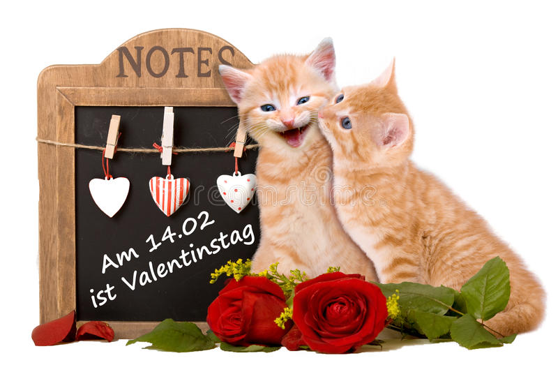 Valentine'S Day. Two cats in love background royalty free stock image