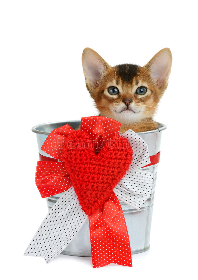 Valentine theme kitten sitting in a silver bucket. With red heart isolated on white background royalty free stock photos