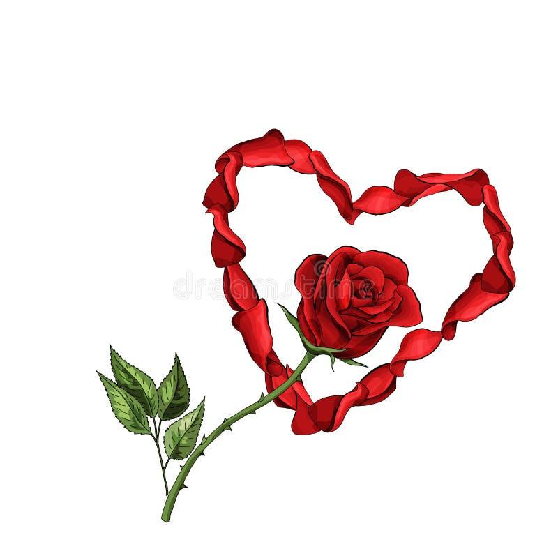 Valentine-van het de prentbriefkaarmalplaatje van de dagliefde het rode de bloemblaadjeshart, nam geïsoleerde bloem toe royalty-vrije illustratie