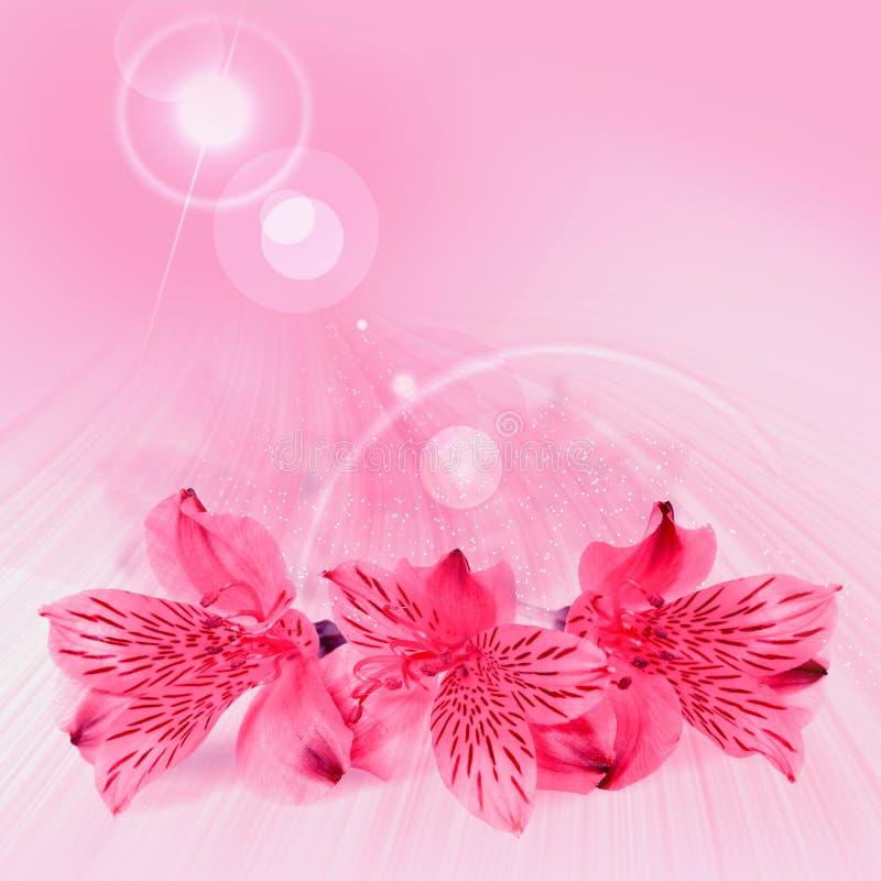 valentiner för kortdagpink royaltyfri illustrationer
