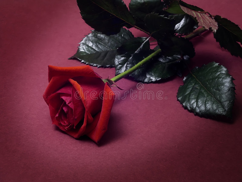Valentines photographie stock