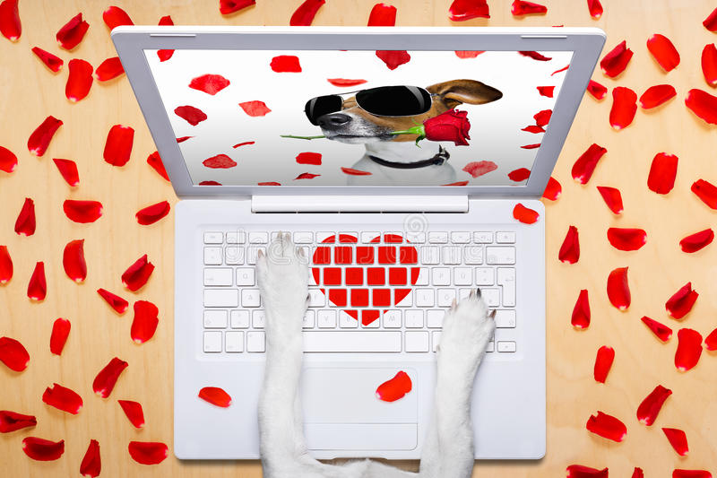 Valentines day dog, dating online on a chat stock photography