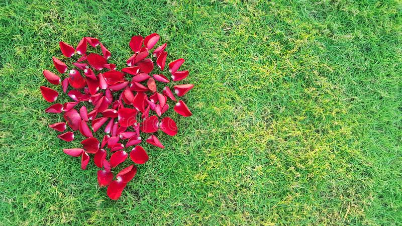 Valentines Day Heart Made of Red Roses petals Isolated on Green Grass background stock images