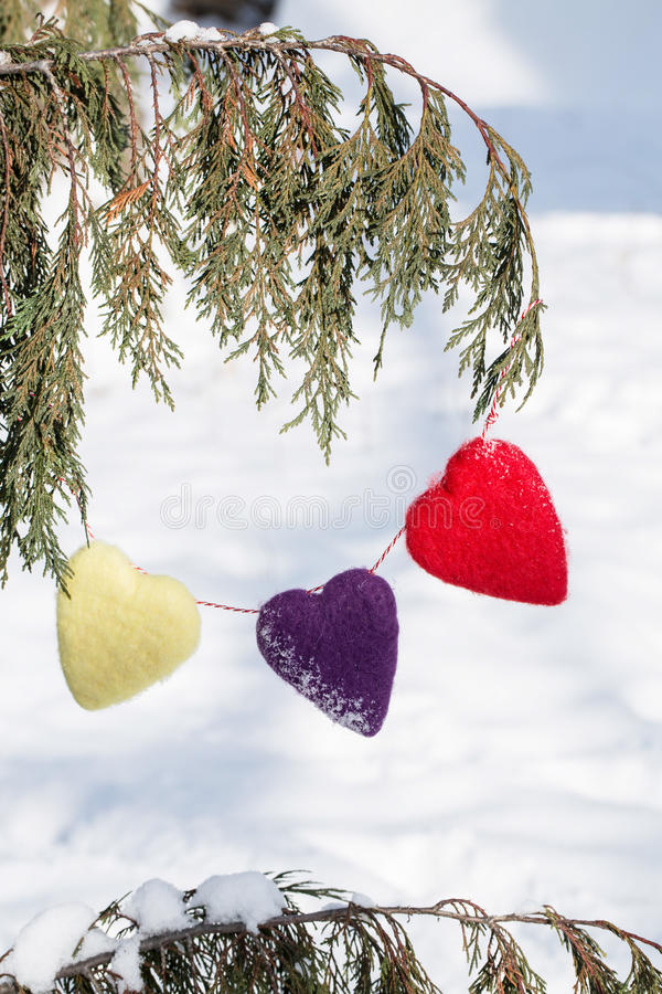 Valentines Day Hearts Hanging From Pine Tree In Winter royalty free stock photo