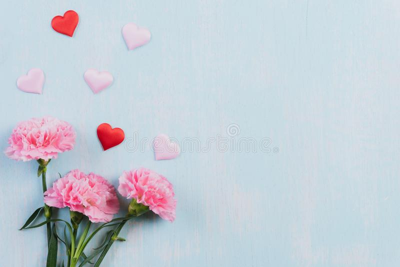 Valentines day and love concept. Pink carnation flower with red heart on blue pastel background stock photo
