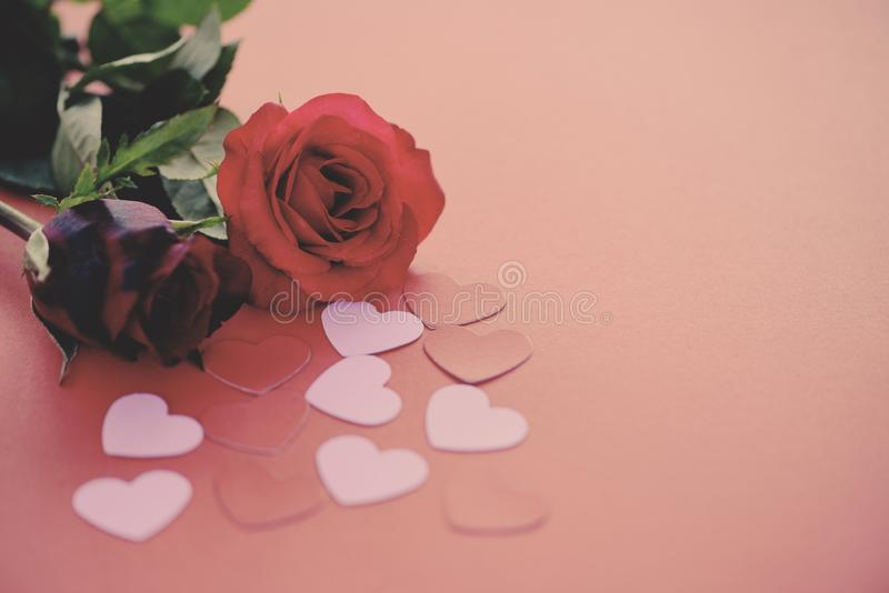 Valentines day romantic flower love concept / red roses flower and pink heart on red stock images