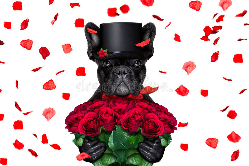 Valentines dog stock images