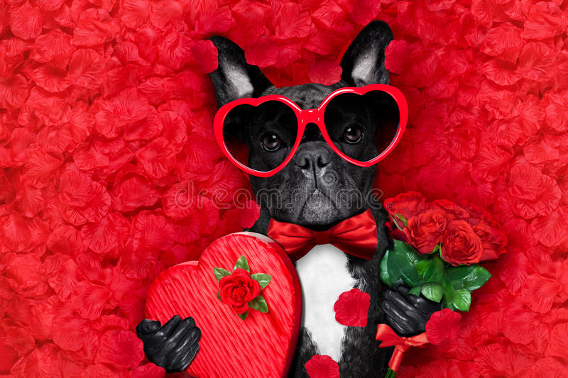 Download Valentines dog in love stock photo. Image of happy, crazy - 83721854