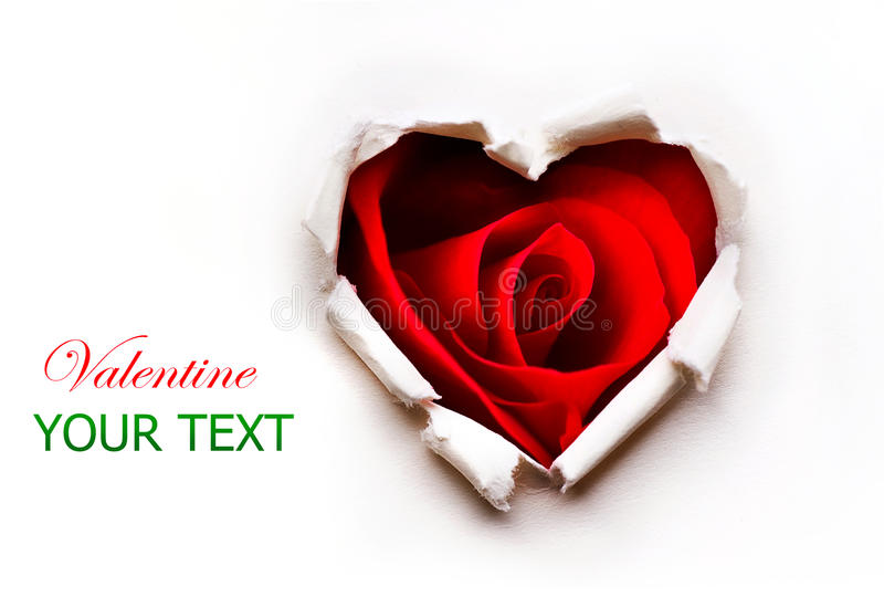 Valentines Heart with Red Rose. Paper Valentines Heart with Red Rose Flower inside stock image