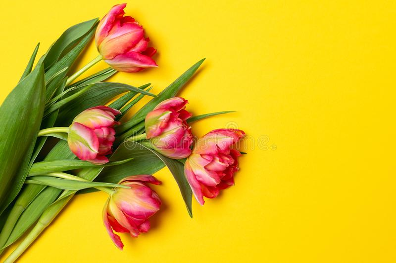 Valentines Womens mothers day concept 8 March Spring - pink tulips on yellow background stock photo