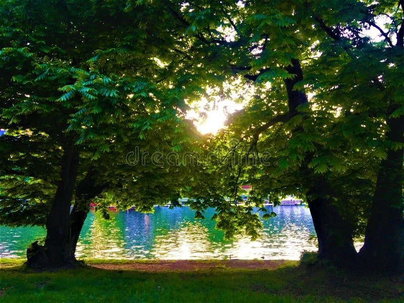Valentino Park, árvores e luz na cidade de Turin, Itália fotos de stock royalty free