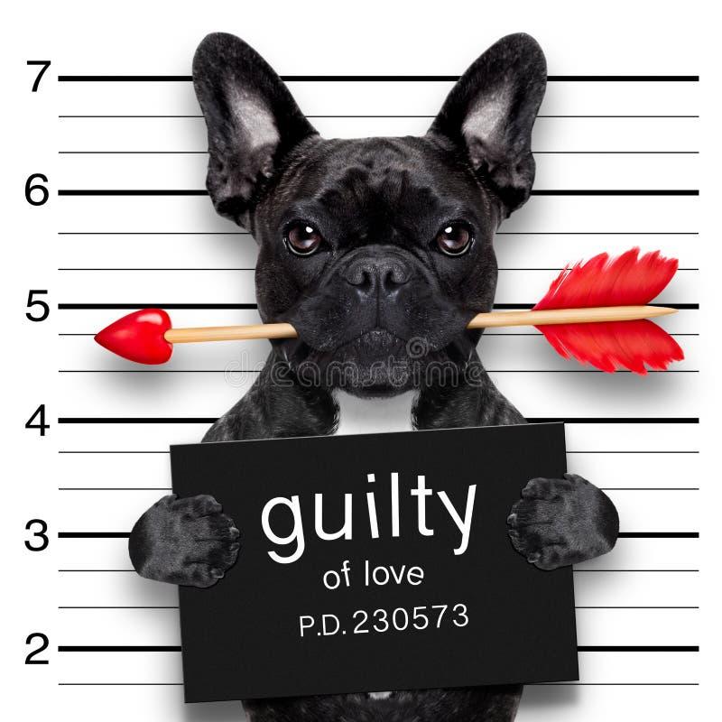 Valentinsgrüße Mugshothund lizenzfreie stockfotografie