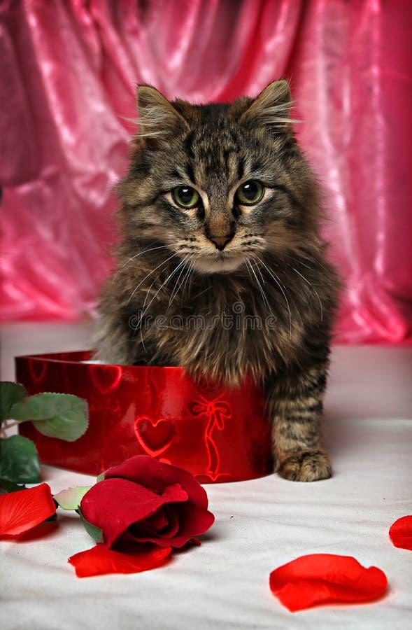 Valentinsgruß-Kätzchen lizenzfreie stockbilder