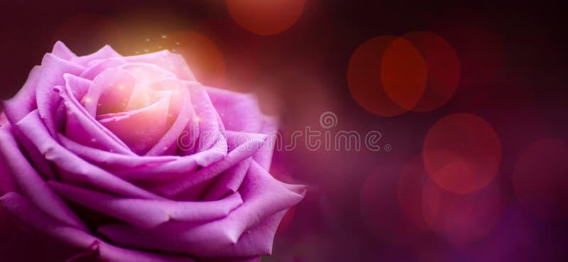 Valentinsgruß-Tag-Bokeh-Fahne Rose purpurrote rote stockbild
