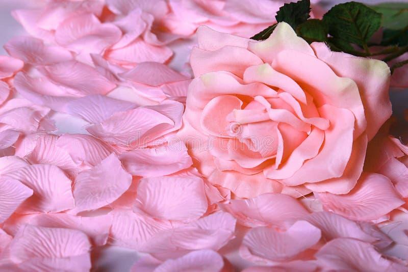 Valentinsgrußrosen stockfotografie