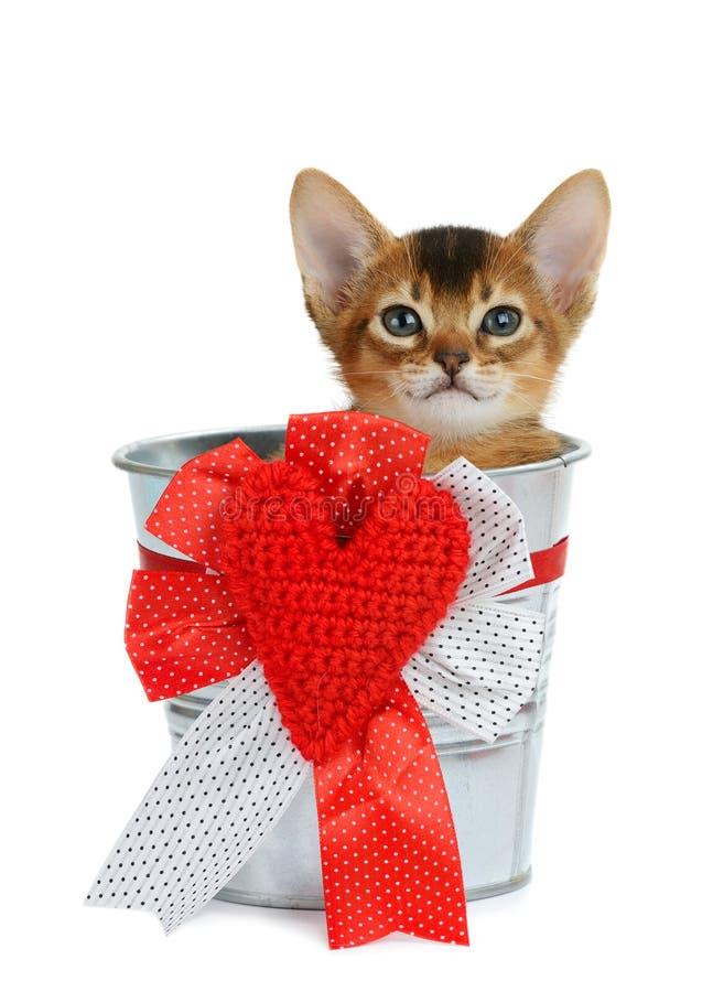 Valentinsgrußthemakätzchen, das in einem silbernen Eimer sitzt lizenzfreie stockfotos