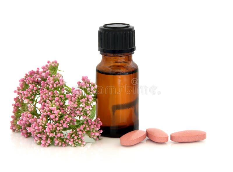 valerian θεραπείας χορταριών στοκ εικόνα με δικαίωμα ελεύθερης χρήσης