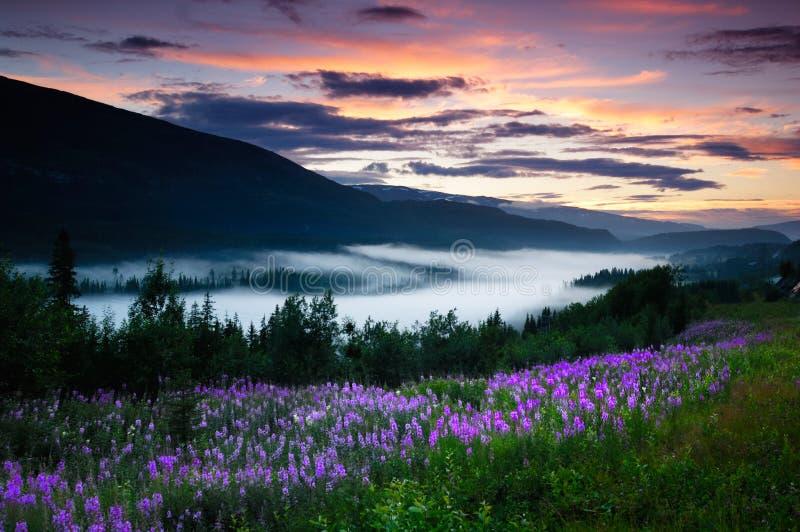 Valey della Norvegia fotografie stock libere da diritti