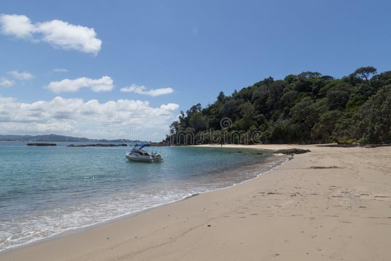 Valfjärd på den Tutukaka kusten i Nya Zeeland royaltyfri fotografi